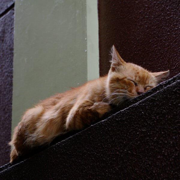 小石川の猫